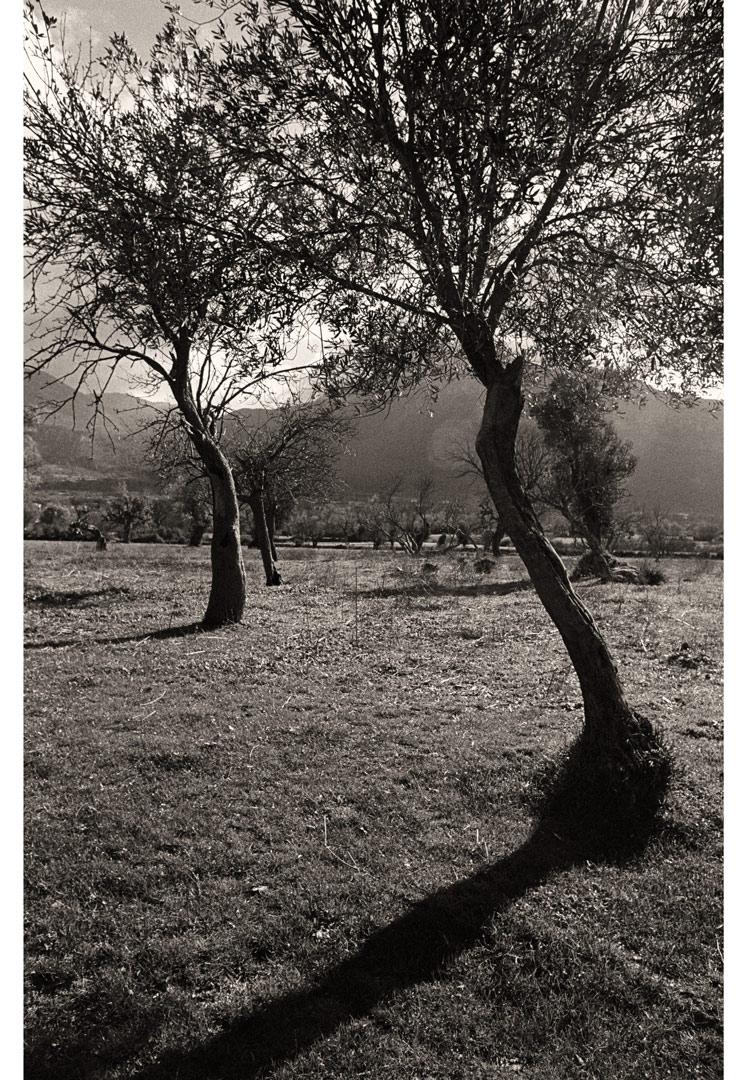 Landscapes_1_06